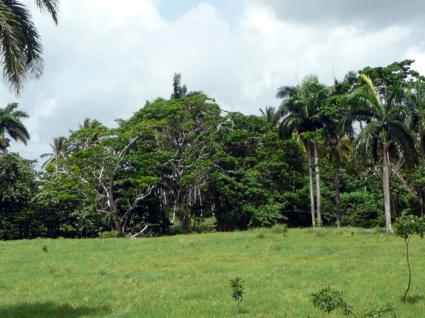 Image Sale land payita  0