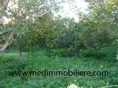 Image Sale land weed souhil nabeul 1