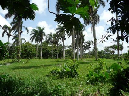 Image Sale land payita  3