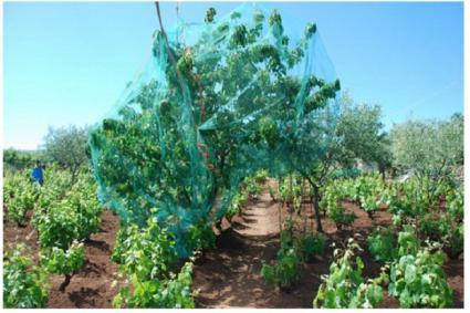 Image Sale farm abbasanta oristano 3