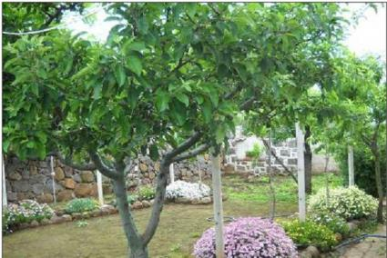 Image Sale farm abbasanta oristano 6