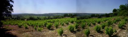 Image Sale land seguret 84110 avignon 1