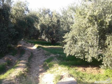 Image Sale farm marrakech  3