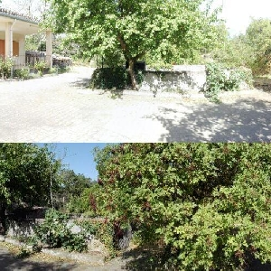 Appartamento in Contrada Difesa di Bronte (CT) Zona Parco dell'ETNA e Terreno Coltivabile e Pertinenze></noscript>