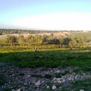 Sale land essaouira essaouira></noscript>                                                         <span class=