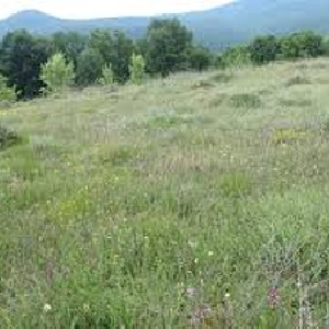 Image A vendre terrain 162 hectares 0